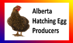Alberta Hatchery Eggs For XXL